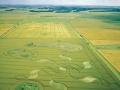 Normanton-Down-Stonehenge-Wiltshire-Wheat-04.07.02.jpg